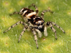 Tổng hợp ý nghĩa giấc mơ thấy nhện đánh con gì dễ trúng?